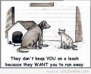 runaway-cat