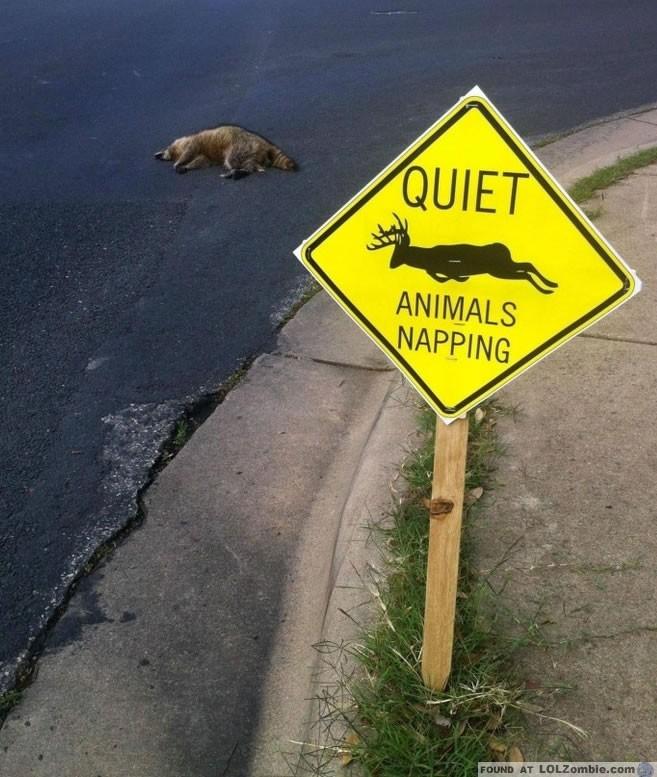 animals napping sign