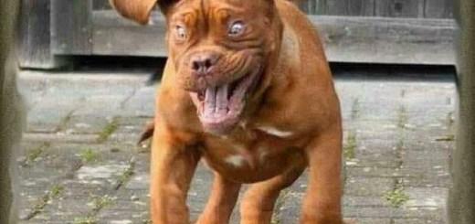 Dog Drinking Coffee