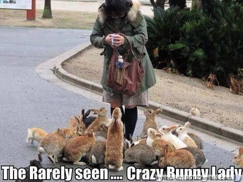 crazy bnunny