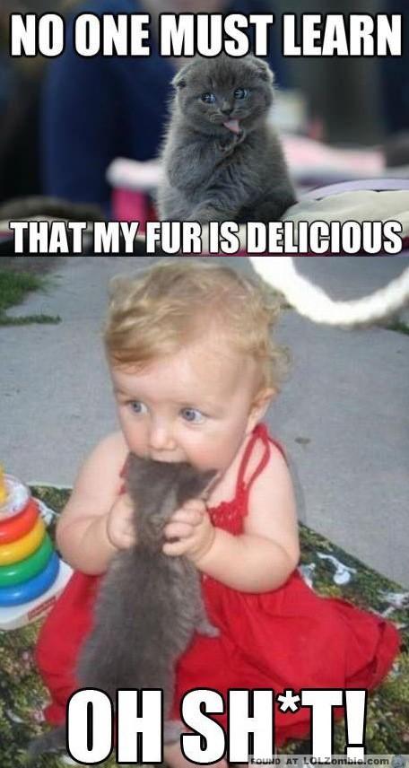 Baby Eats Cats
