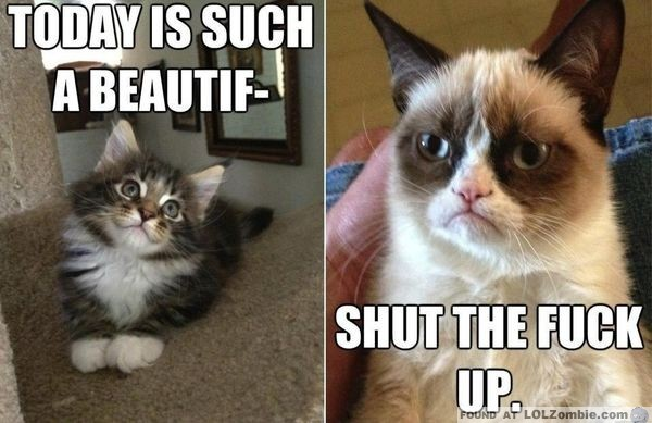 Beautiful Day - Grumpy Cat