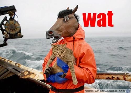 Horse Man Holding Cat