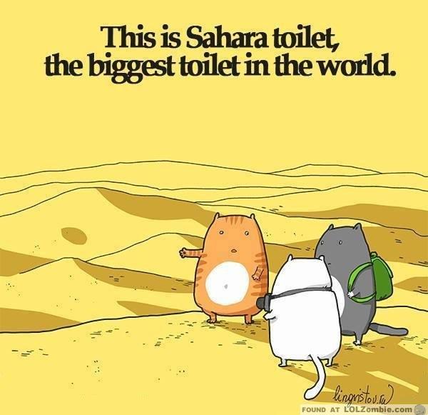 Sahara Desert Toilet