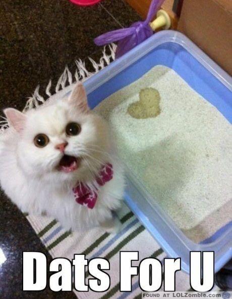 Cat Pee Heart