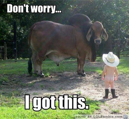 Cowboy Kid vs Bull