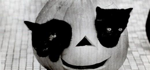 Kitten Pumpkin