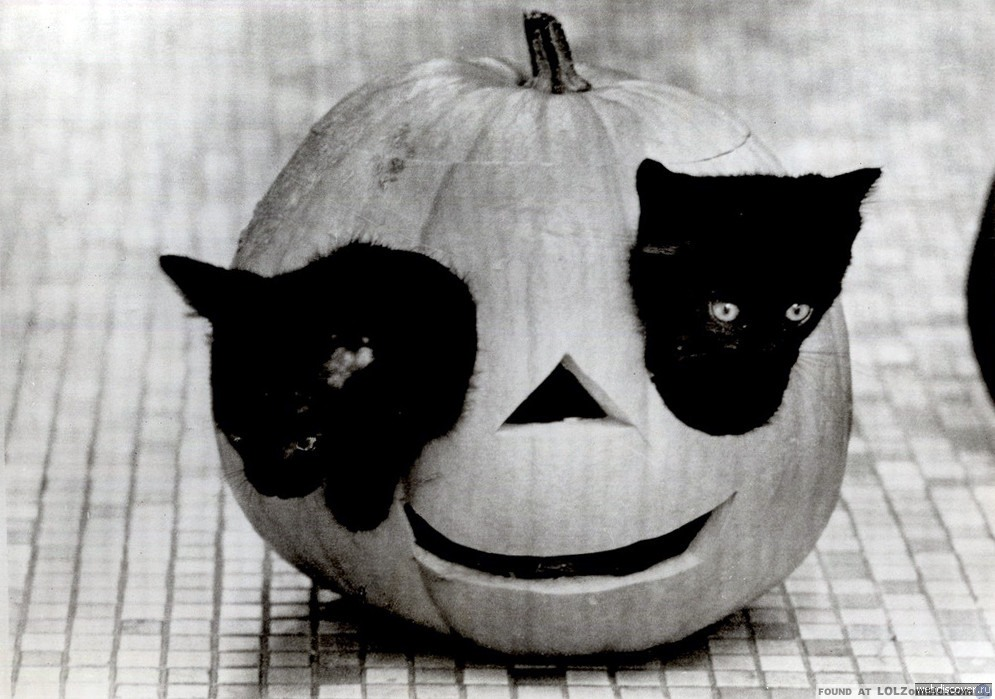 Kitten Pumpkin