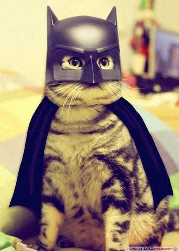Have no fear, Batcat is here.