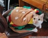 Eat up hamburger cat.