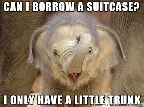 Little Trunk Elephant