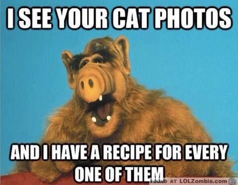 Alf Cat Photos