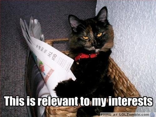 Cat Reading Newspaper