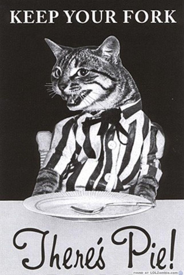 Cat Waiting for Pie