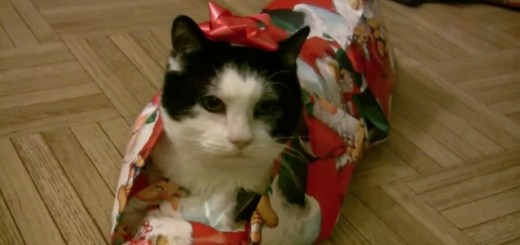 how to gift wrap a cat video - How To Wrap A Cat For Christmas