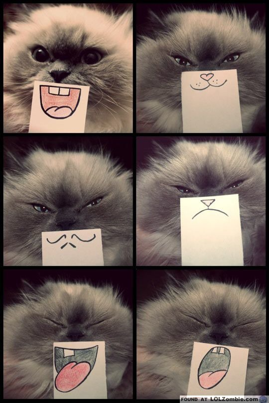cat faces