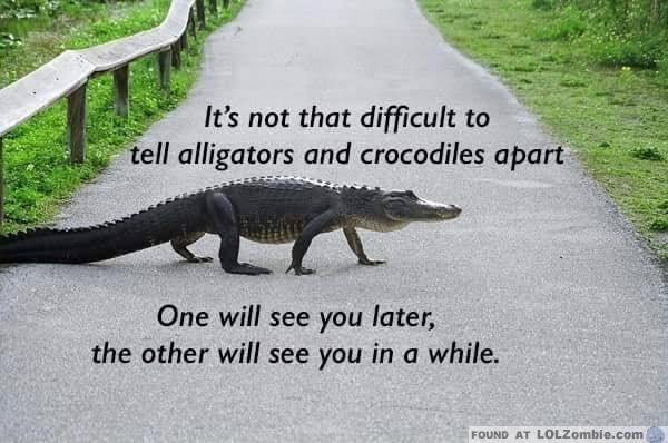 alligator-croc
