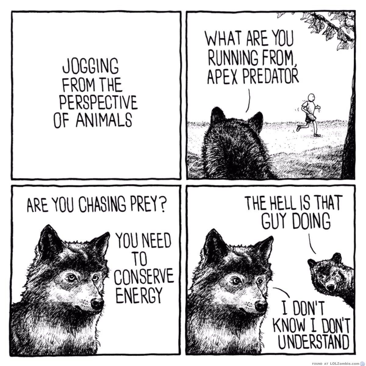 Animals making fun of runners..