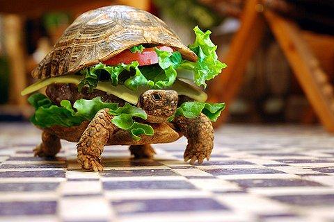 Moving Cheeseburger