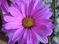 flor del Ramo