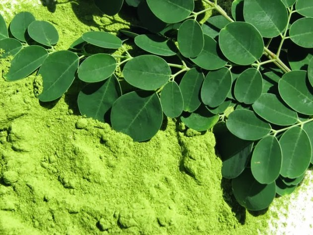 How The Moringa Plant Benefits Hair Growth