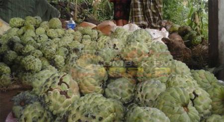 Buah srikaya hasil panen warga Desa Perigi Kecamatan Suela Kabupaten Lombok Timur