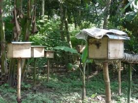 Beternak Lebah Tingkatkan Pendapatan-organik (2)