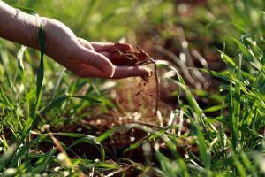 fertilità terra