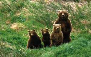 cuccioli-orso-1280x800