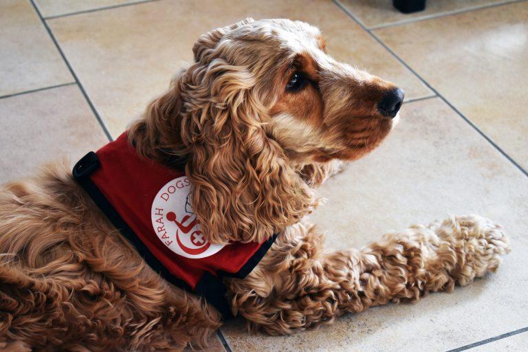 Portrait : Alpha, un chien extraordinaire !