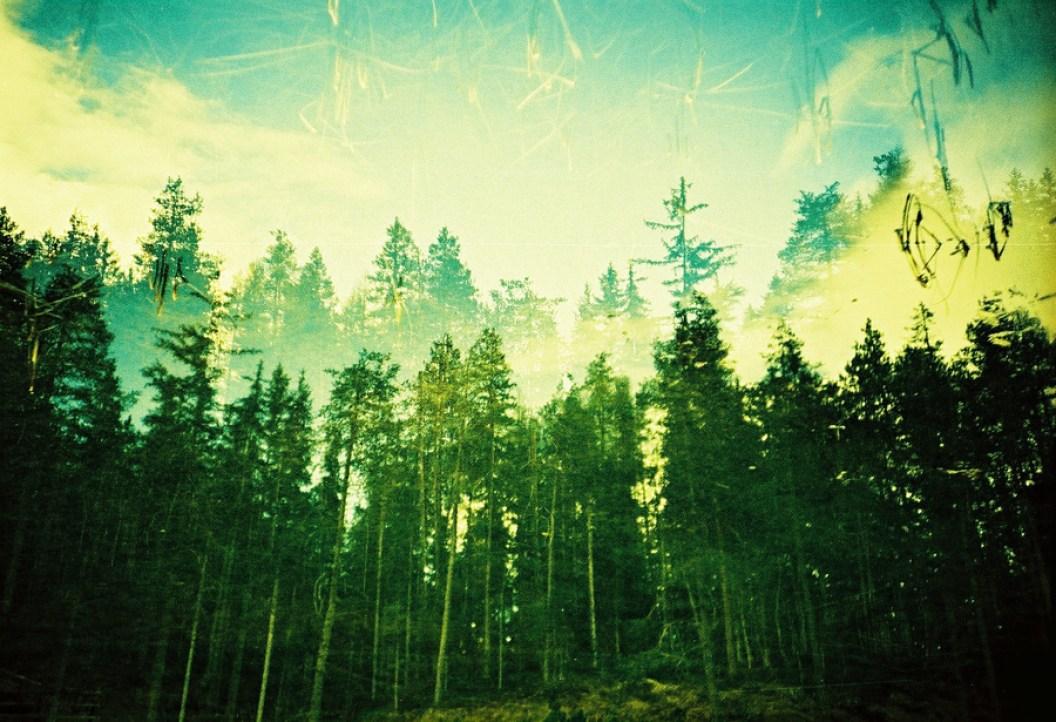 Doppelbelichtung am Waldesrand