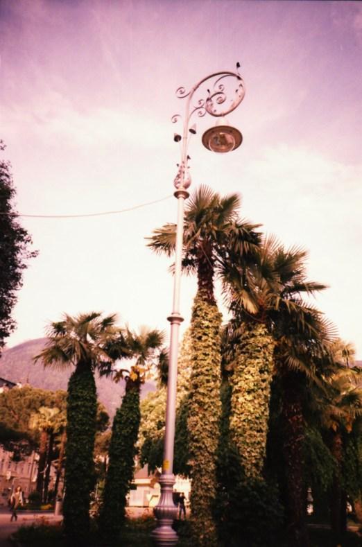 ...und Palmen.