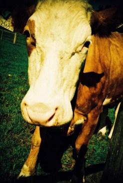 Die (einzige) Kuh ohne Namen von Chi Prà