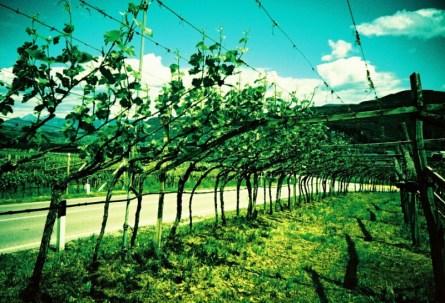 Südtirols Weinstraße