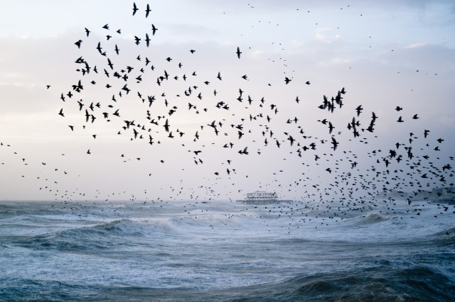 Stormy Seas and Starling Murmuration