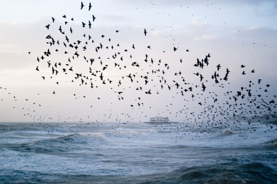 Stormy Seas and Starling Murmuration February 2014