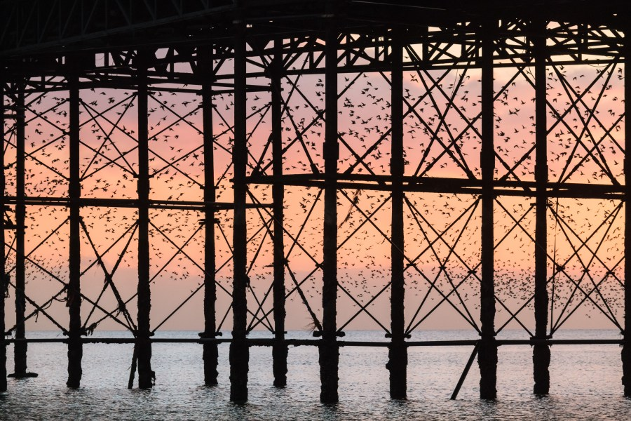 Starling murmuration through Brighton pier by Kevin Meredith