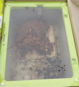 A box of bees (as you do)