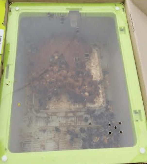 A box of bees (as you do). Image copyright Lisa Mogensen.
