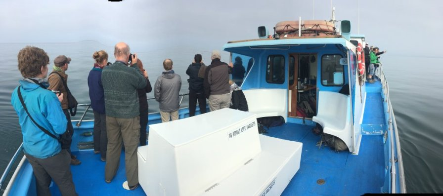 Understanding cetacean evolution, behaviour and threats on a whale-watching trip in Monterey Bay. Image copyright Paul Minton.