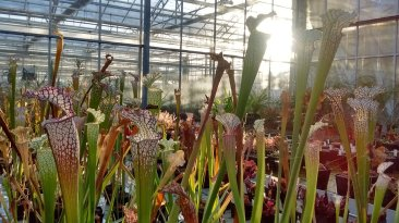 Biodiversity training at Kew Gardens. Image by Dan Nicholson.