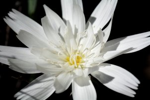 Flora in Palm Canyon. Image copyright Joe Williamson.