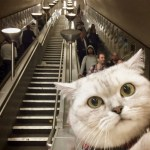 Cat at the bottom of the escalators at a London Undeground Station