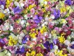 女心をくすぐる花の世界