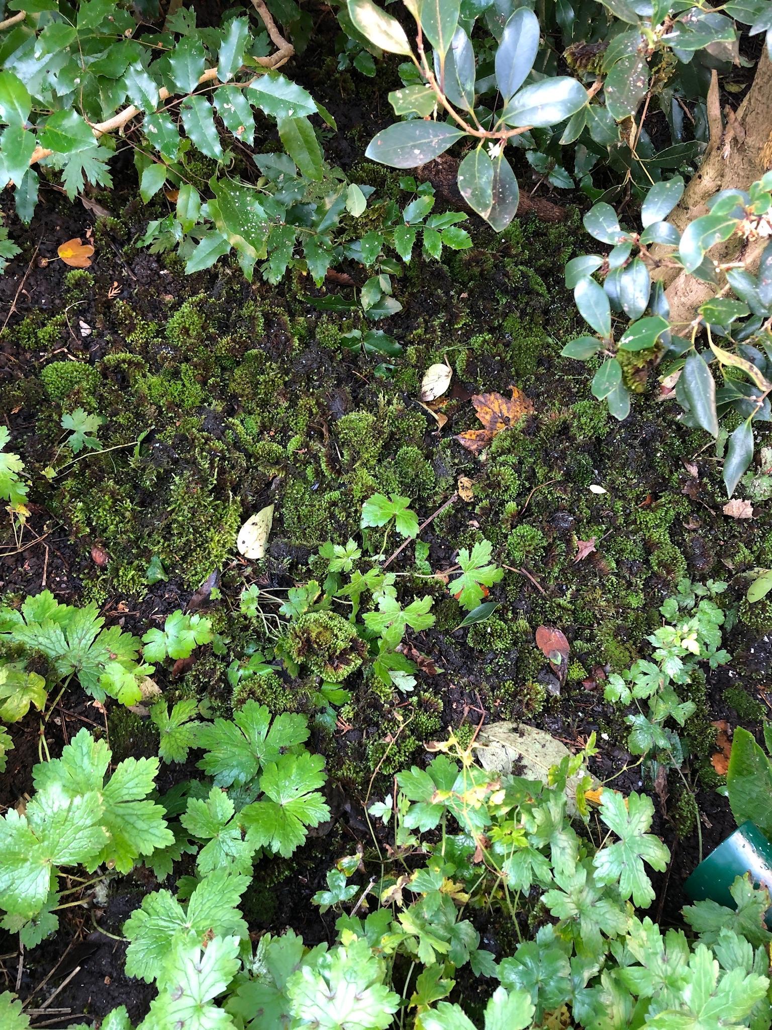 Moss in a cottage garden