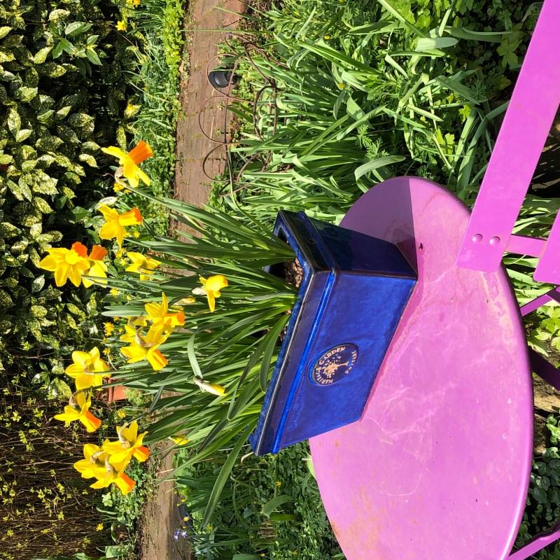 Introduce a new colour into your garden