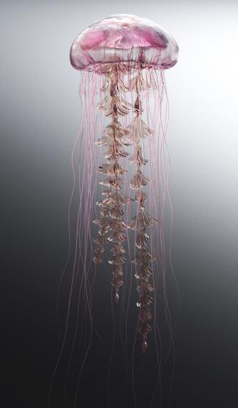 Jellyfish Rise
