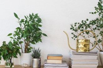 Bring The Outdoors In: How To Make The Most Of Houseplants In Your Home