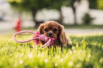 Dog Friendly Garden Design