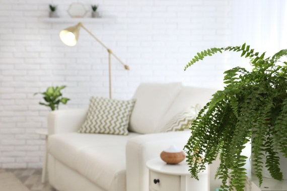 White living room with white sofa and plants